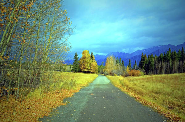 Photograph - Gold Trees And Blue Skies In Banff by Tara Turner