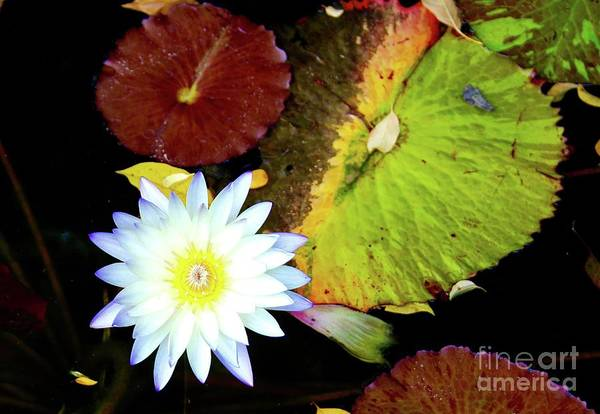 Wall Art - Photograph - Golde Center Water Lily by Gregory E Dean