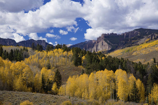 Wall Art - Photograph - Golden Aspen Trees In The Gunnison National Forest Of Colorado by Bridget Calip