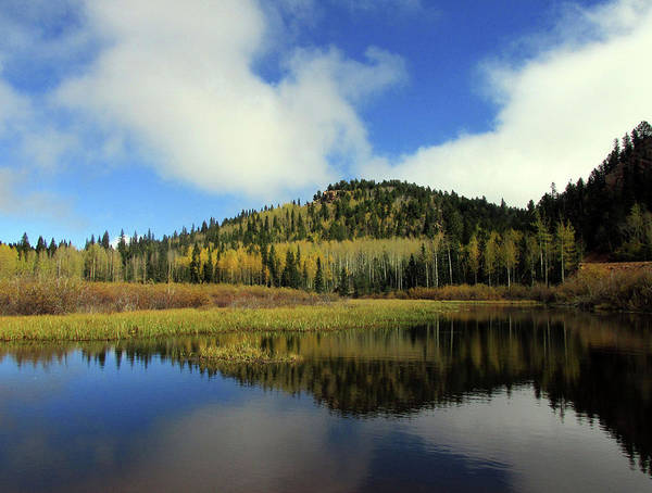 Photograph - Golden Aspens And Clouds Reflected In A Colorado Pond by Julia L Wright