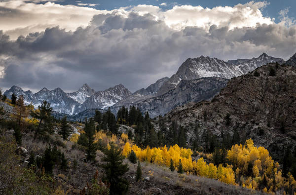 Wall Art - Photograph - Golden Aspens And Snow by Cat Connor
