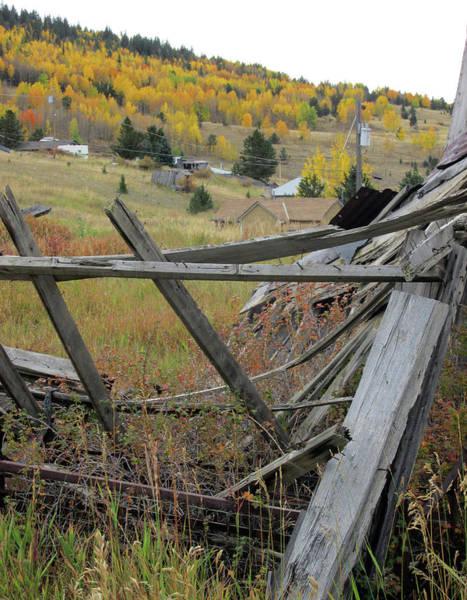 Photograph - Golden Aspens Beyond A Fallen Cabin by Julia L Wright