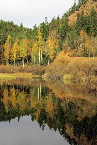 Photograph - Golden Aspens Reflected In A Colorado Pond by Julia L Wright