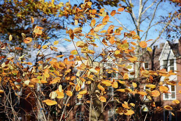 Photograph - Golden Autumn Afternoon by Cate Franklyn
