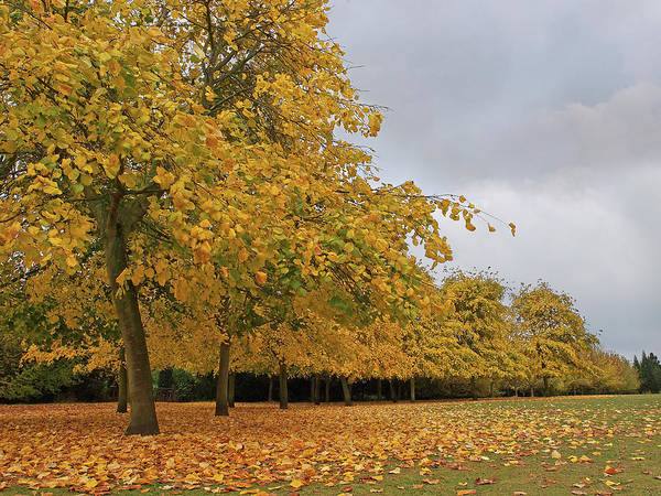 Photograph - Golden Autumn Days by Gill Billington