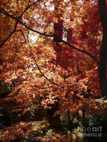 Photograph - Golden Autumn Sunshine by Carol Groenen