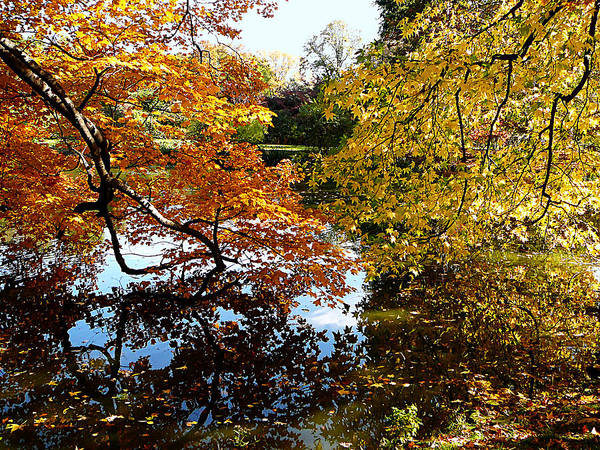Photograph - Golden Autumn Trees by Susan Savad