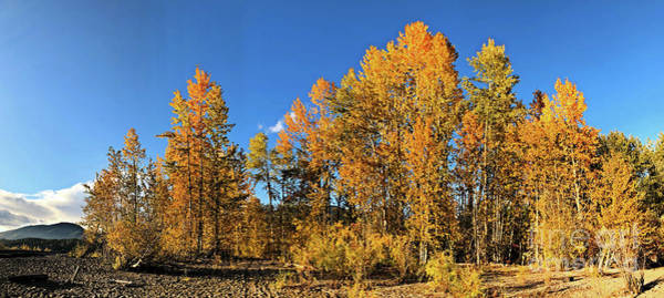 Photograph - Golden Autumn Trees by Victor K