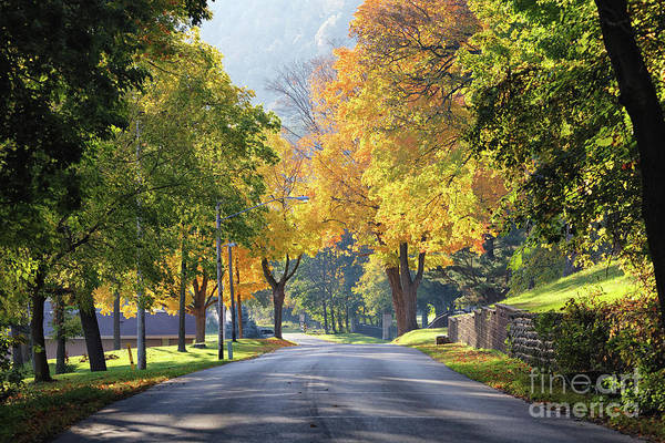 Photograph - Golden Autumn Trees West Lake Boulevard Winona by Kari Yearous