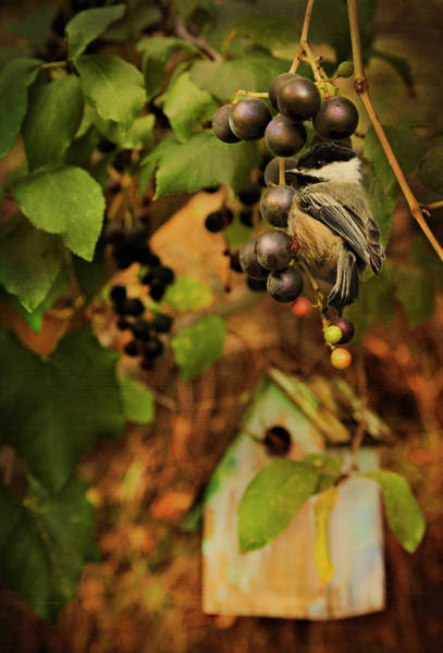 Photograph - Golden Autumn With Chickadee by Theresa Tahara