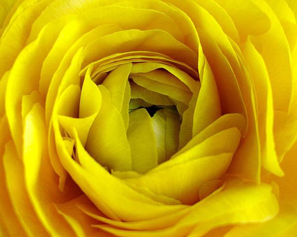 Photograph - Golden Beauty by Lynda Lehmann