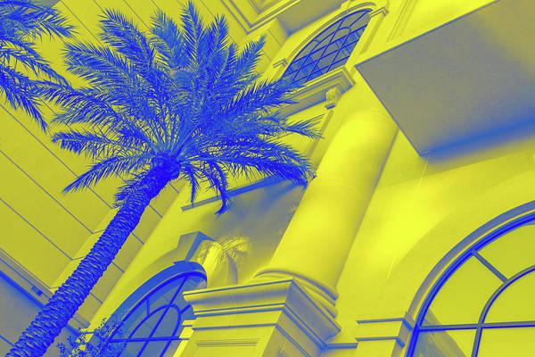Photograph - Golden Beryl And Sapphire - Jewel Colored Palm Tree by Georgia Mizuleva
