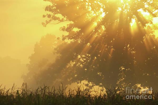 Photograph - Golden Blessings by Rachel Cohen