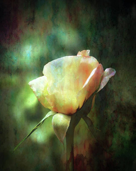 Photograph - Golden Blush Impression 3564 Idp_2 by Steven Ward