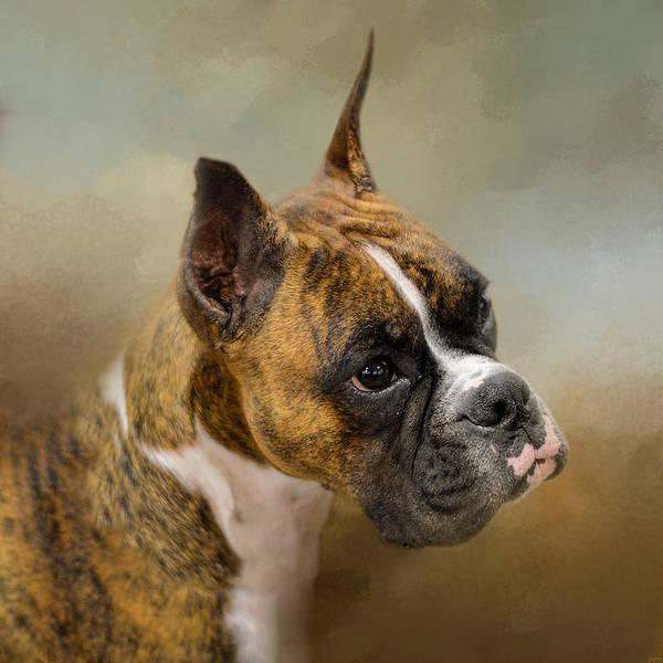 Photograph - Golden Brindle Boxer by Jai Johnson