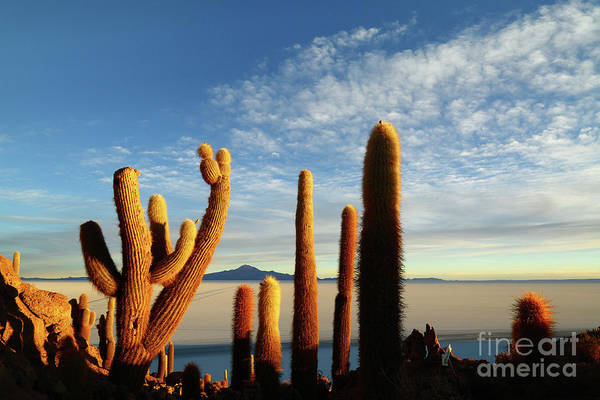 Photograph - Golden Cactus Sunrise Salar De Uyuni Bolivia by James Brunker