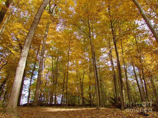 Photograph - Golden Canopy by Pamela Clements