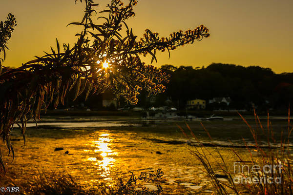 Photograph - Golden Centerport by Alissa Beth Photography