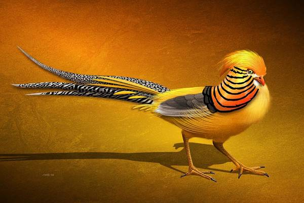 Pheasant Digital Art - Golden Chinese Pheasant by John Wills