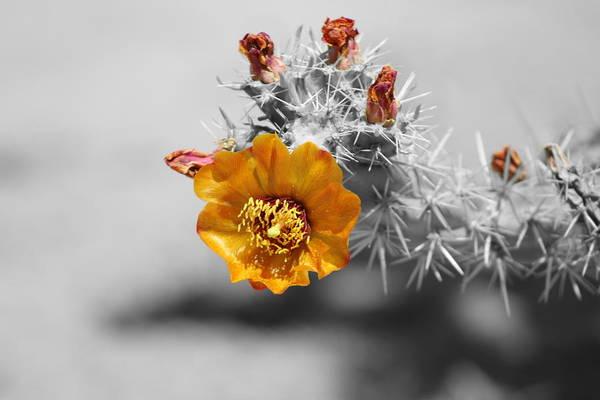 Photograph - Golden by Colleen Cornelius
