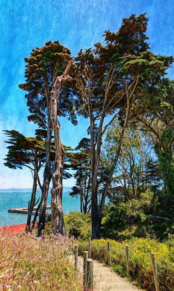 Photograph - Golden Cypress Trees by John M Bailey