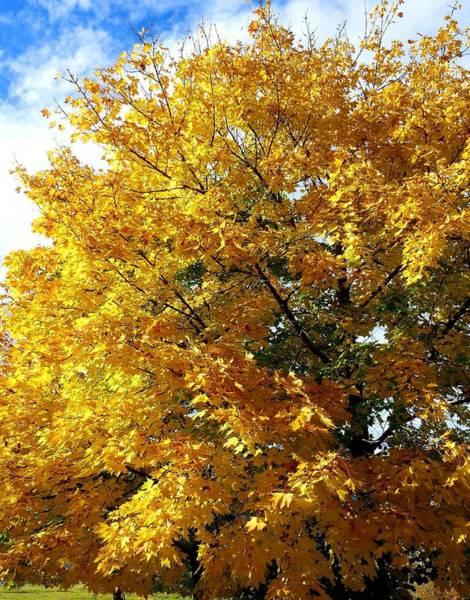 Wall Art - Photograph - Golden Days Of Fall by Will Borden