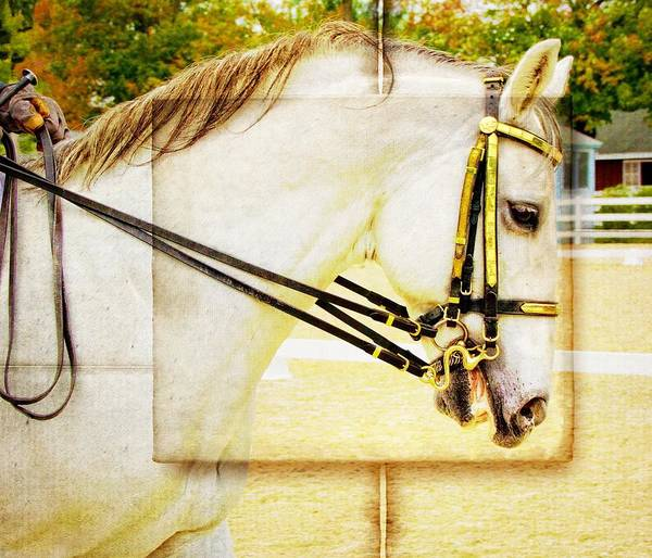 Photograph - Golden Double Bridle by Alice Gipson