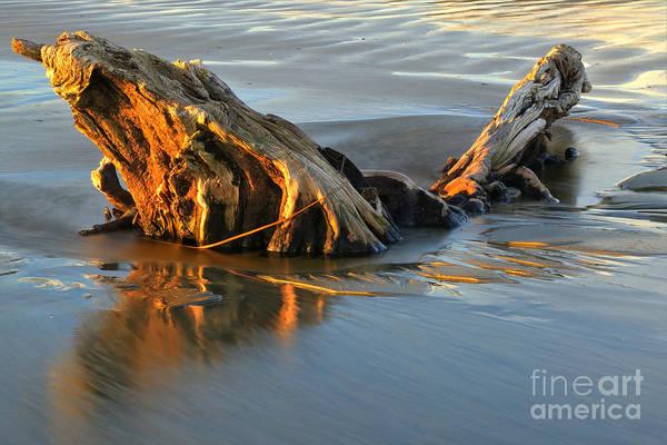 Photograph - Golden Drifter by Adam Jewell