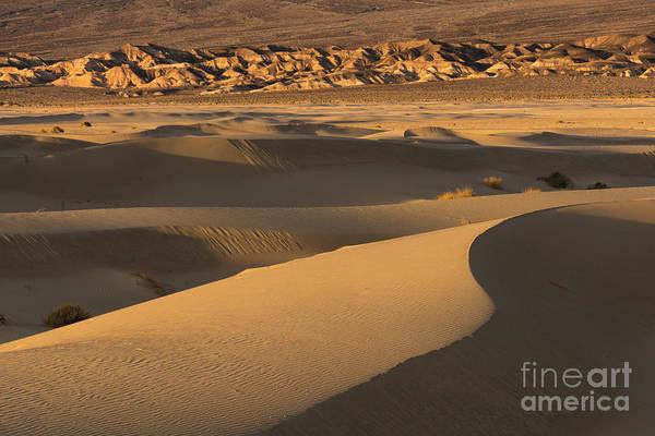 Death Valley Np Photograph - Golden Dunes by Brenda Tharp