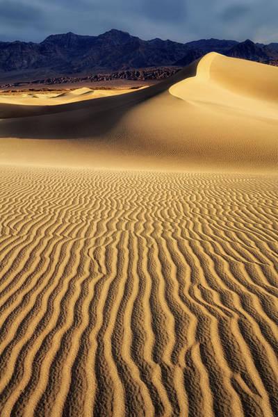 Wall Art - Photograph - Golden Dunes by Nicki Frates