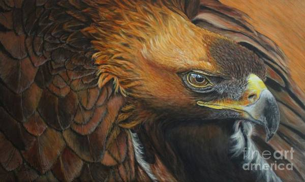Painting - Golden Eagle by Bob Williams