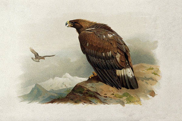 Bird Watercolor Mixed Media - Golden Eagle By Thorburn by Archibald Thorburn