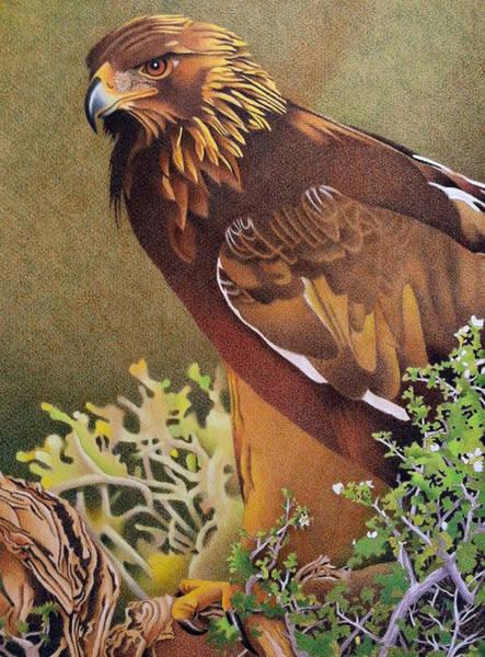 Drawing - Golden Eagle by Dan Miller