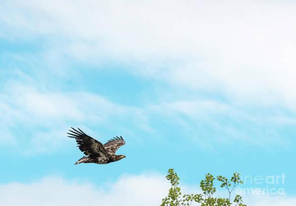 Photograph - Golden Eagle Flying by Les Palenik