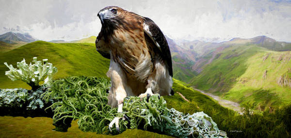 Photograph - Golden Eagle On The Hilltop by Ericamaxine Price