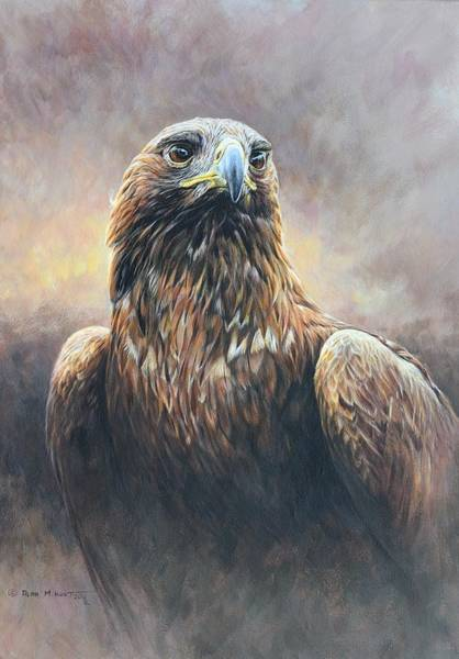 Painting - Golden Eagle Portrait by Alan M Hunt