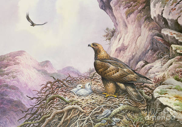 Breeding Painting - Golden Eagles At Their Eyrie by Carl Donner