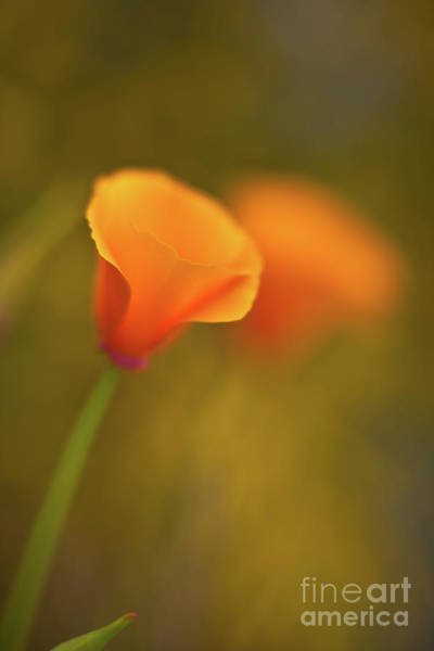 Golden Photograph - Golden Edges by Mike Reid