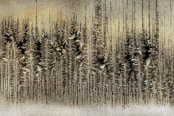 Wall Art - Photograph - Golden Enchanted Forest by Lori Deiter