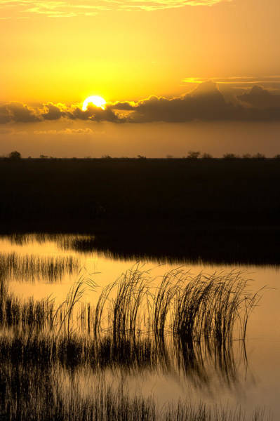 Photograph - Golden Evening by Ed Gleichman
