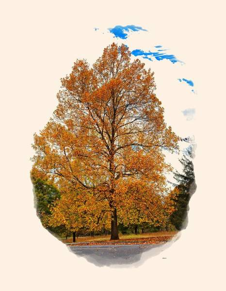Photograph - Golden Fall Colors 2 by John M Bailey