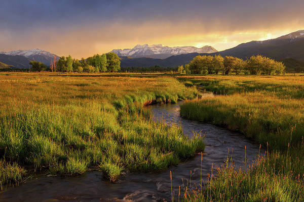 Golden Field In Heber Valley. Art Print