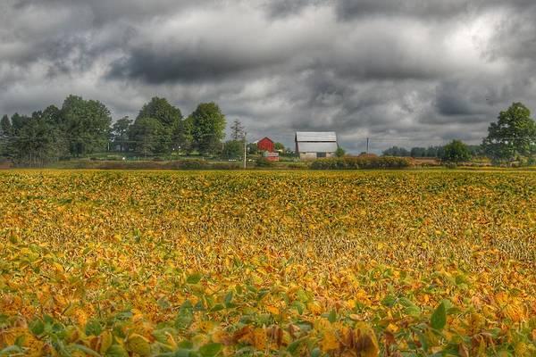 0012 - Golden Fields Farm Art Print