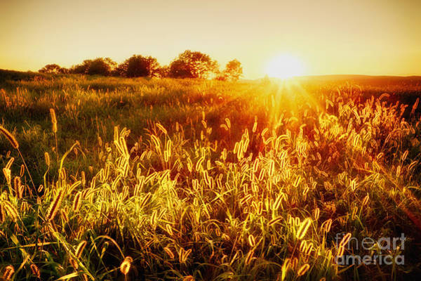 Photograph - Golden Fields by Mark Miller
