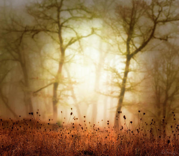 Photograph - Golden Fog by Dee Browning