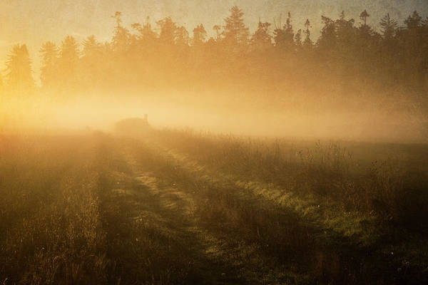 Photograph - Golden Fog by Mary Lee Dereske
