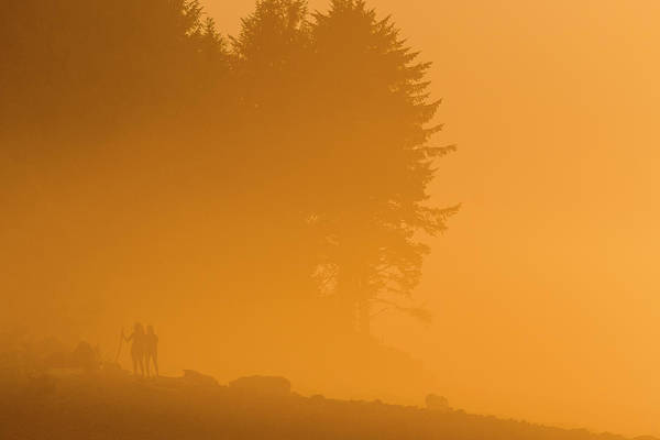 Photograph - Golden Fog by Robert Potts
