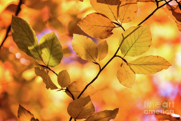 Wall Art - Photograph - Golden Foliage by Delphimages Photo Creations
