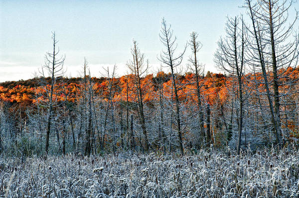 Photograph - Golden Frost by Doug Gibbons