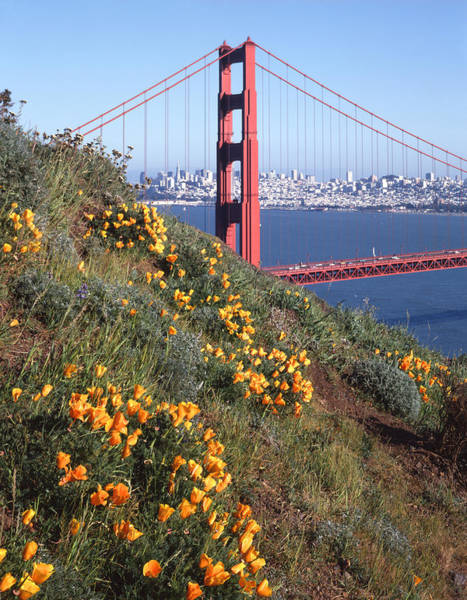 Photograph - 2a6x94-golden Gate Bridge And Poppies  by Ed  Cooper Photography